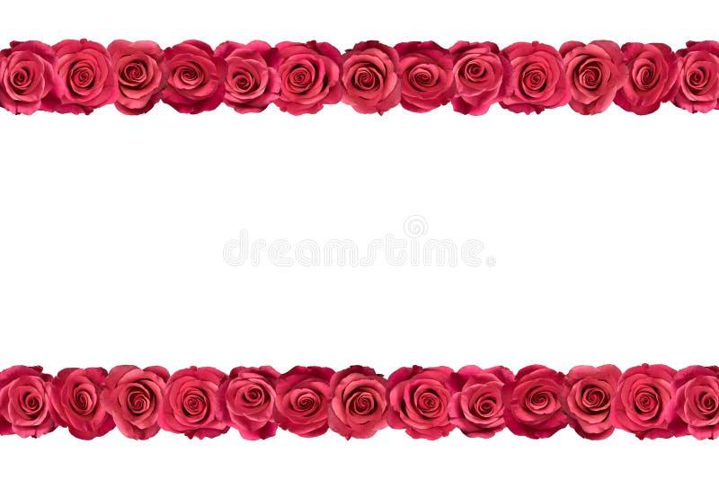 Roses roses dans les rangées 3 photos stock