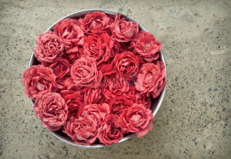 Roses roses dans un bol photographie stock libre de droits