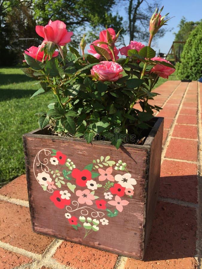 Roses dans un pot de fleur en bois photographie stock libre de droits