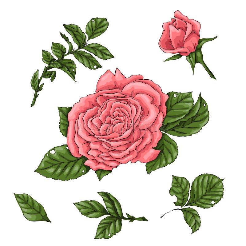 Roses de corail de carte postale Illustration de vecteur de dessin de main illustration libre de droits