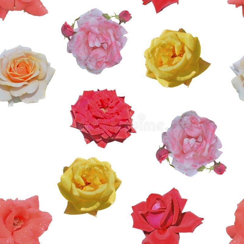 Roses de diferentes colores Patrón transparente fotos de archivo