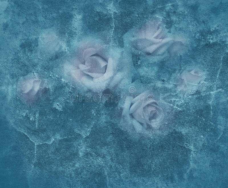Roses de gel photos stock