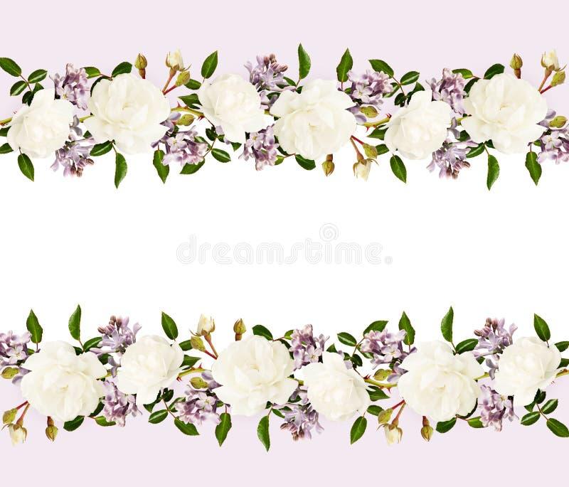 Roses de jardin et fleurs lilas dans des dispositions de frontière photos stock