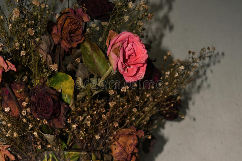 Roses de mort images stock