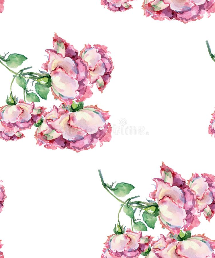 Roses de rose de branche d'aquarelle Configuration sans joint florale illustration libre de droits