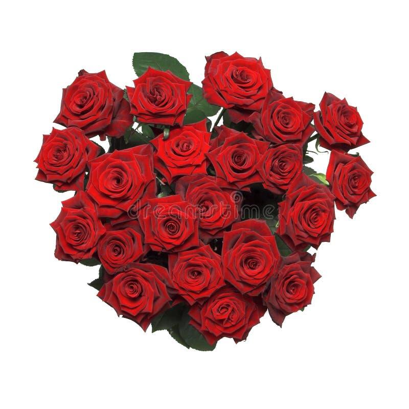 roses de rouge de groupe photographie stock libre de droits