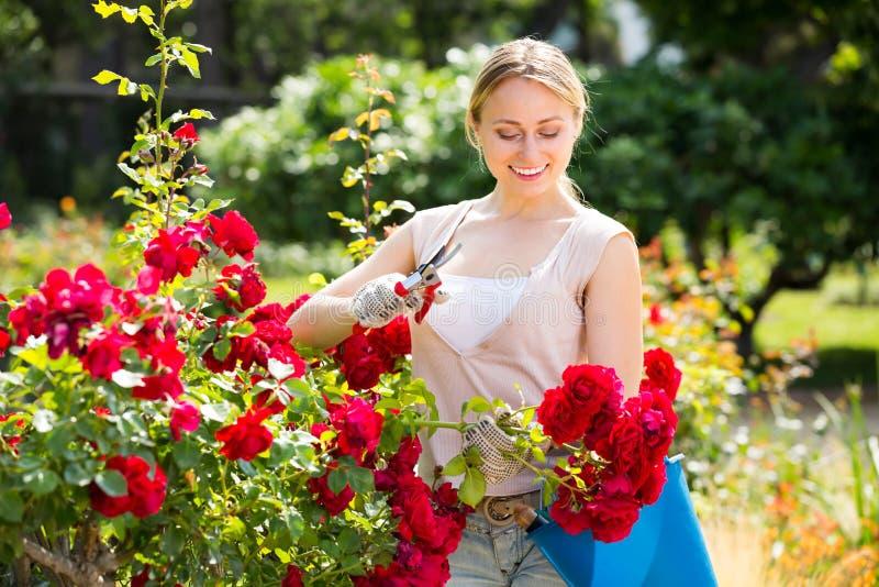 Roses de soin de jeune jardinier féminin photos libres de droits
