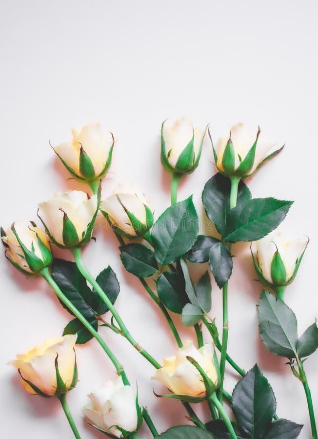 Roses de style de vintage photo libre de droits