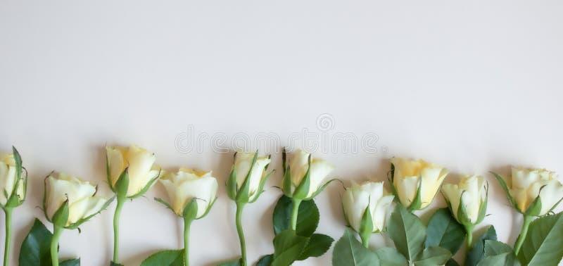 Roses de style de vintage images stock