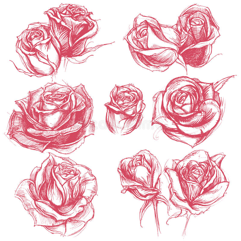 Drawing Lines Using Svg : Roses drawing set stock vector illustration of
