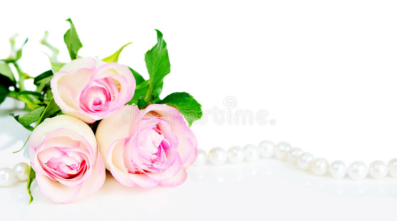 Roses in drops of dew stock image