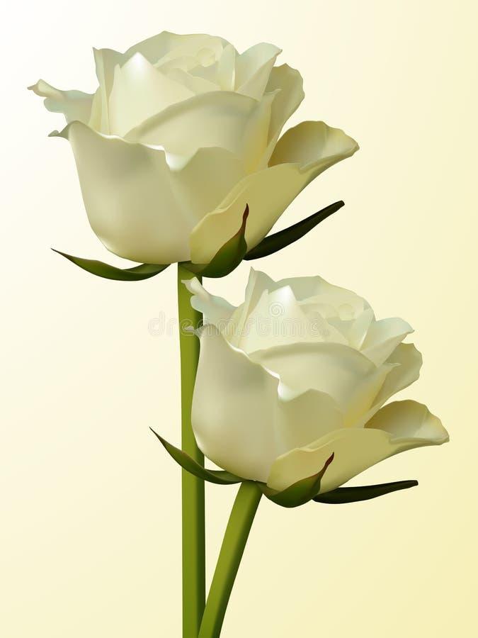 Roses enes ivoire illustration stock