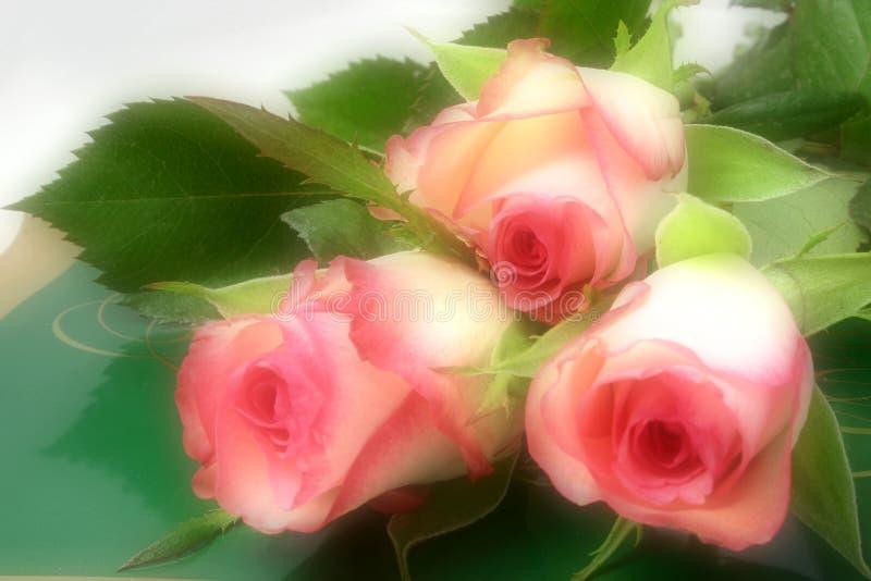 Roses et chocolats photo libre de droits