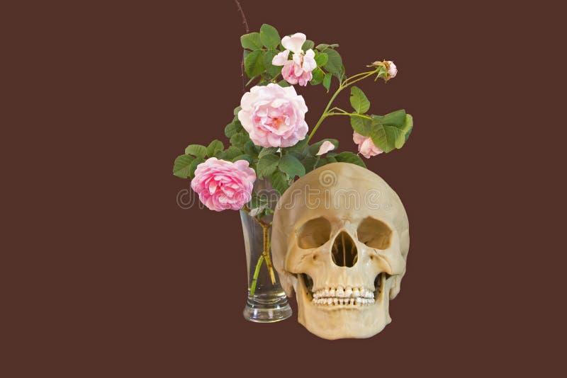 Roses et crâne photos stock