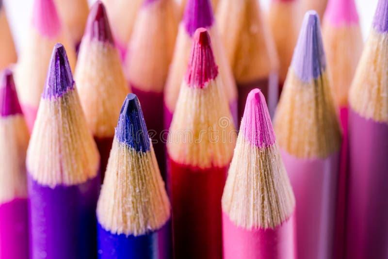 Roses et crayons colorés par pourpres photos stock