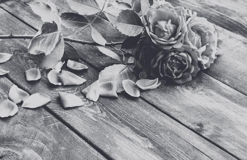 Roses et pétales sur un vieux conseil en bois Photo blanche noire Fleurissez la trame image libre de droits