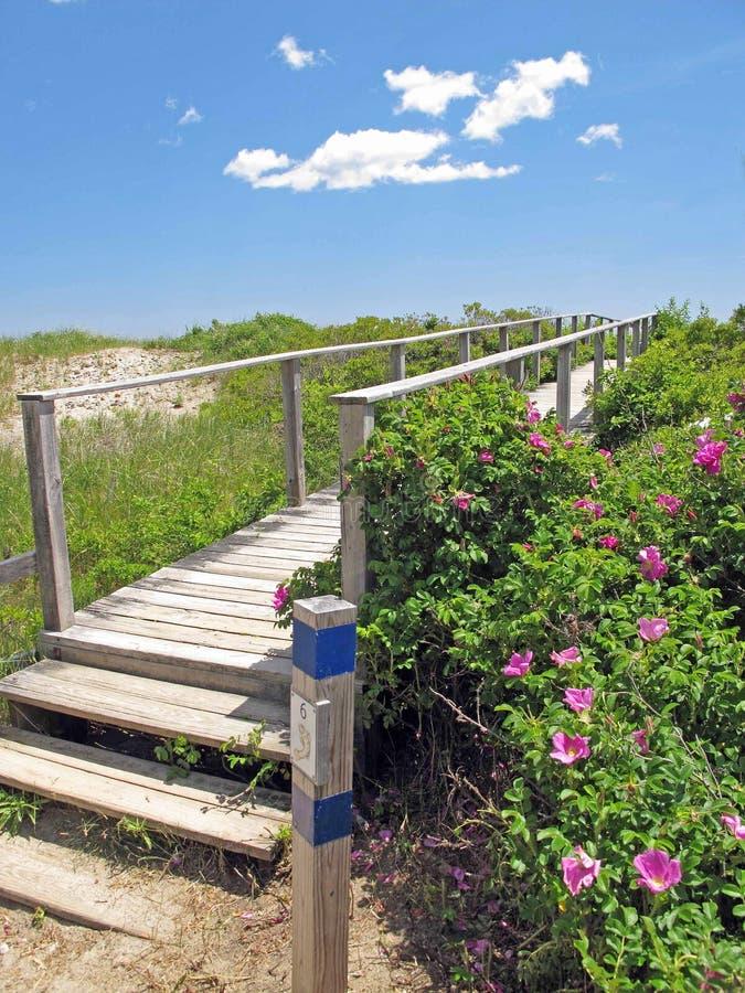 Roses et pont pour échouer Wells Maine photo libre de droits