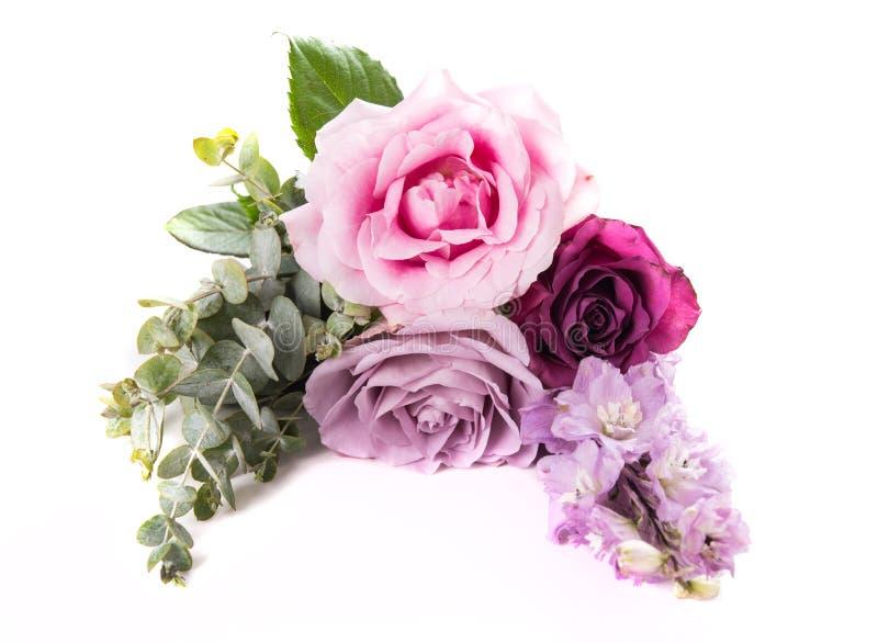 Roses roses et pourpres avec des feuilles d'isolement sur le fond blanc image stock