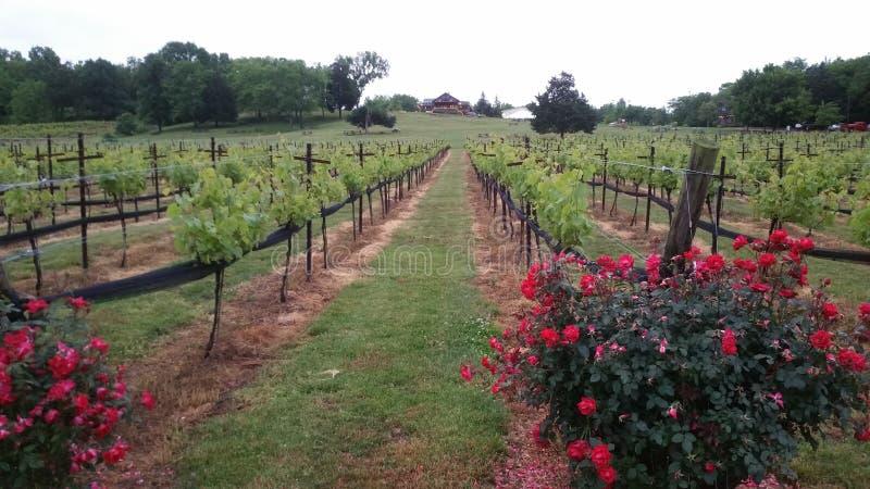 Roses et raisins photo stock