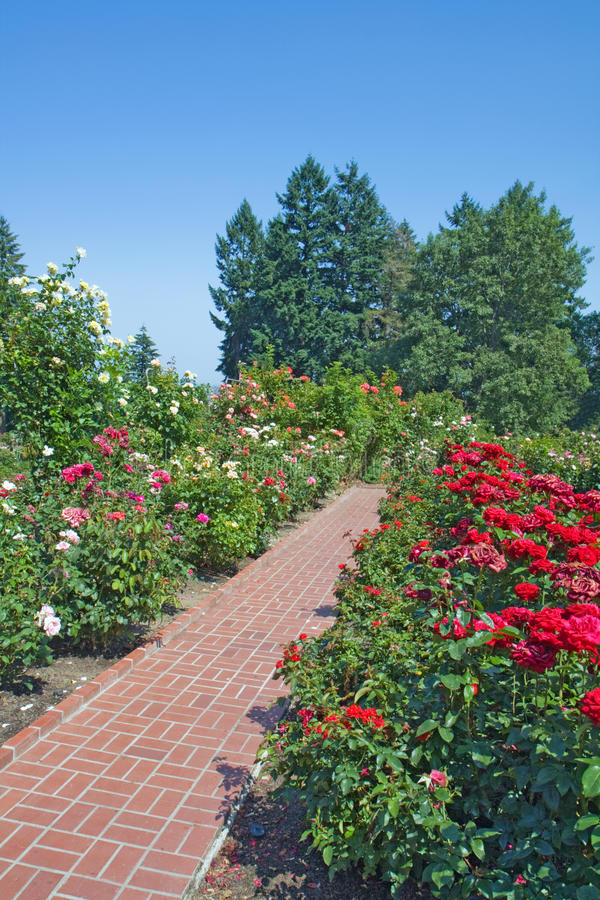 Download Roses, Evergreens And Red Brick Path Vertical Royalty Free Stock Images - Image: 13000169