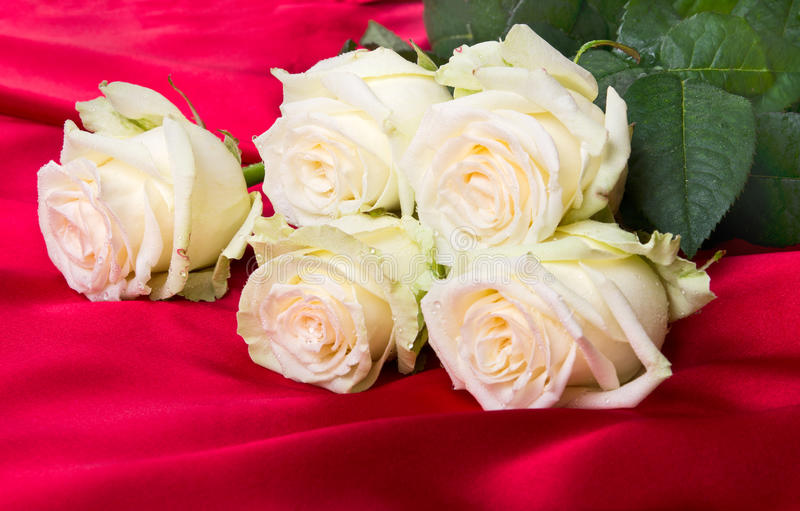 Download Roses on fabric stock photo. Image of closeup, stem, fragility - 20658738