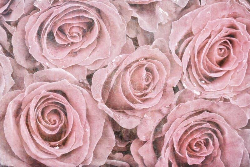 Roses fanées image libre de droits