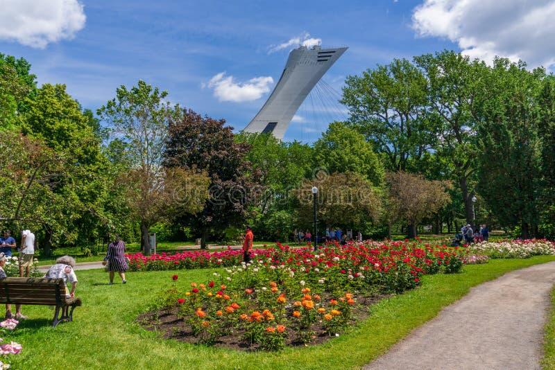 Roses fleurissant le temps au jardin botanique de Montréal photo stock
