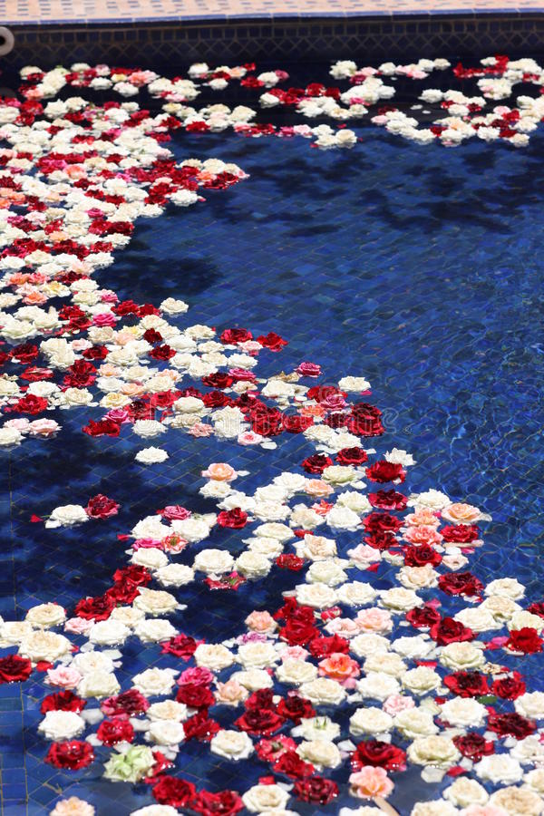 Roses floating. On a pool royalty free stock photos