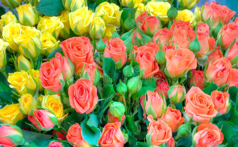 Download Roses flowers stock photo. Image of gift, romantic, bouquet - 22743588