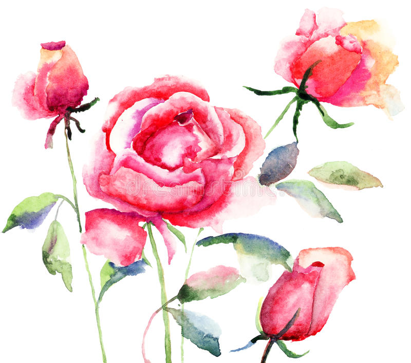 Download Roses Flowers, Watercolor Illustration Stock Illustration - Image: 28336643