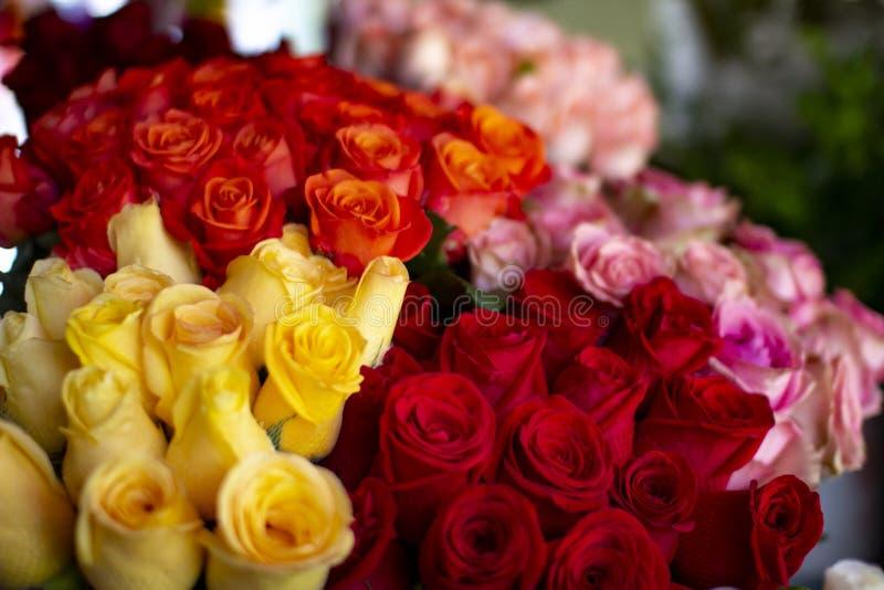 Roses fraîches colorées au fleuriste photos libres de droits
