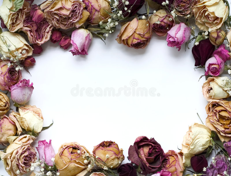 Download Roses frame stock photo. Image of rose, natural, pink, close - 398084