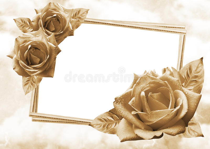 Roses frame. Beautiful roses with photo frame on romantic background stock photo
