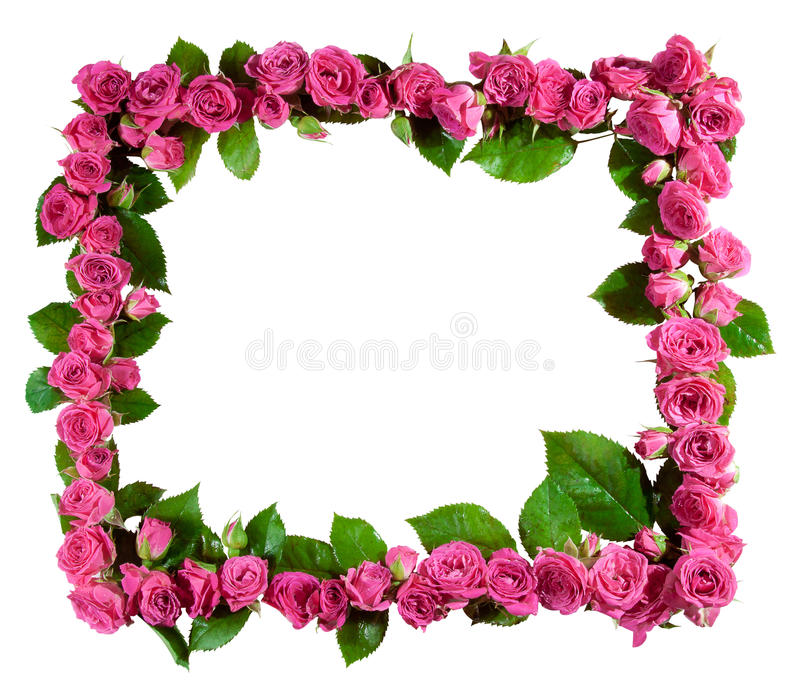 Roses frame, isolated. Frame made of beautiful pink roses and blossoms, isolated on white. Great as a greetings card, for a love message, for a wedding and so on royalty free stock photography