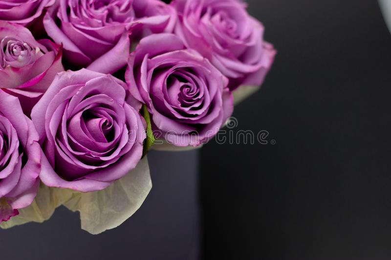 Roses in a hat box on a dark background isolated. Roses in a hat box on a dark background stock images