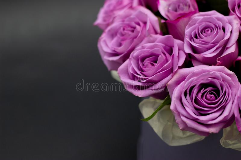 Roses in a hat box on a dark background isolated. Roses in a hat box on a dark background royalty free stock photography