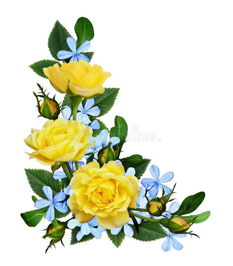 Roses jaunes et petites fleurs bleues dans une disposition faisante le coin images libres de droits
