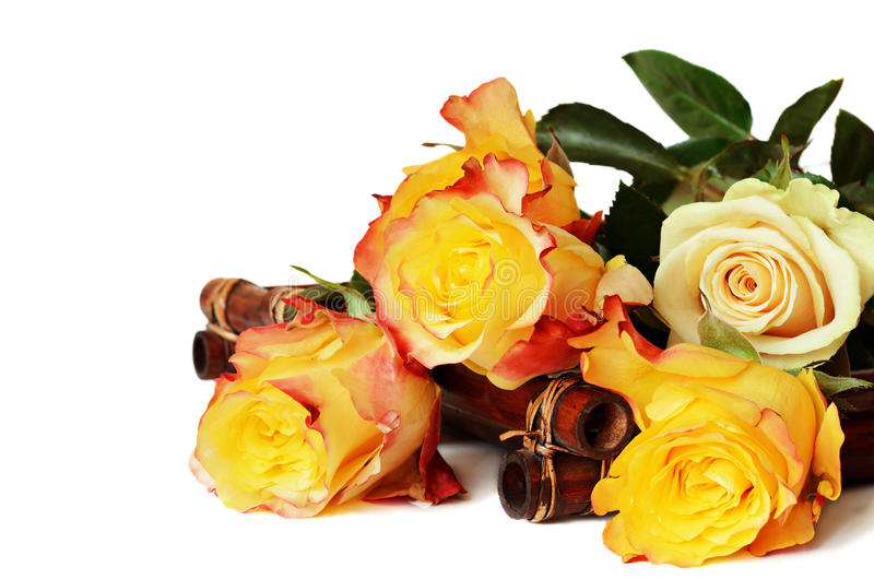 Roses jaunes sur le fond blanc images libres de droits