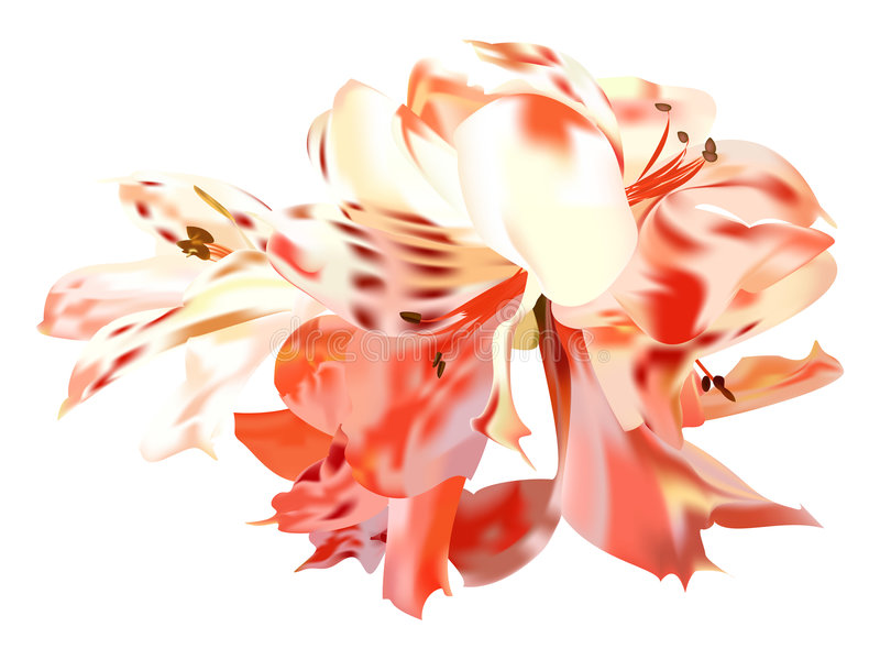 Download Roses Lilies Stock Photo - Image: 3035300