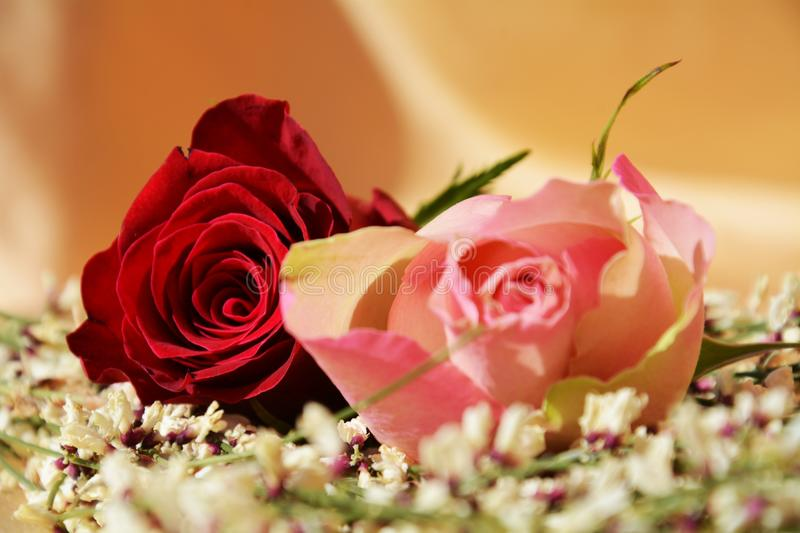 Roses and love royalty free stock image