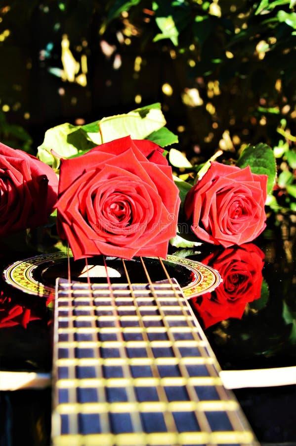 Roses and love, symbols royalty free stock photos