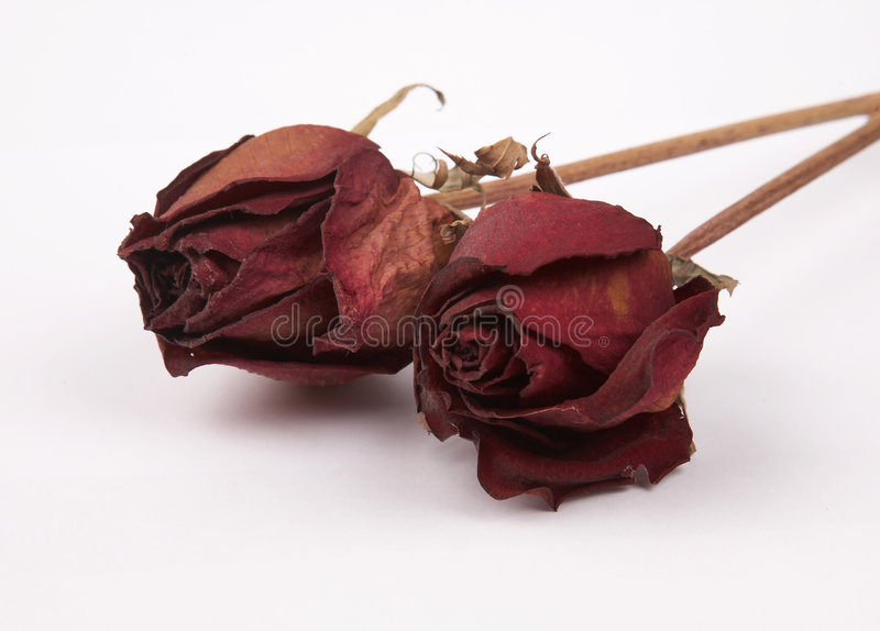 roses mortes photos libres de droits