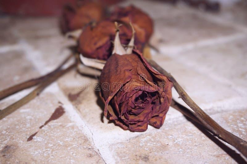 Roses mortes photo stock