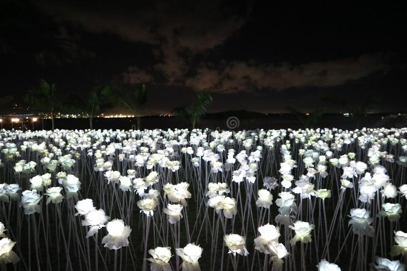 10000 Roses night lights royalty free stock images