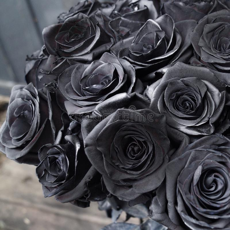 roses noires image stock