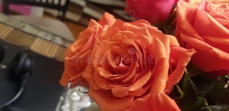 2 roses oranges image stock