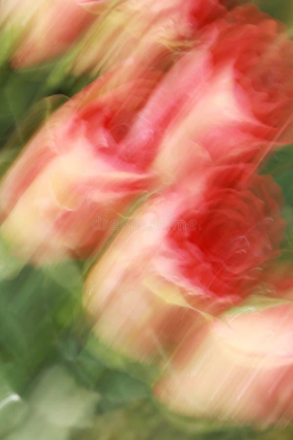 Roses peintes image libre de droits