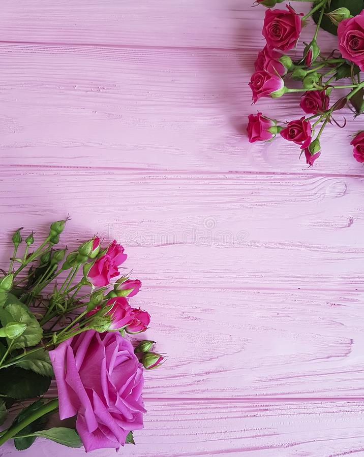 roses on a pink beautiful softness decoration birthday wooden vintage background rustic stock photo
