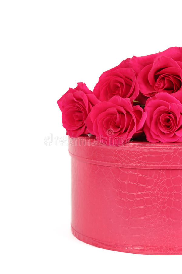 Roses with a pink box. On a white background royalty free stock image