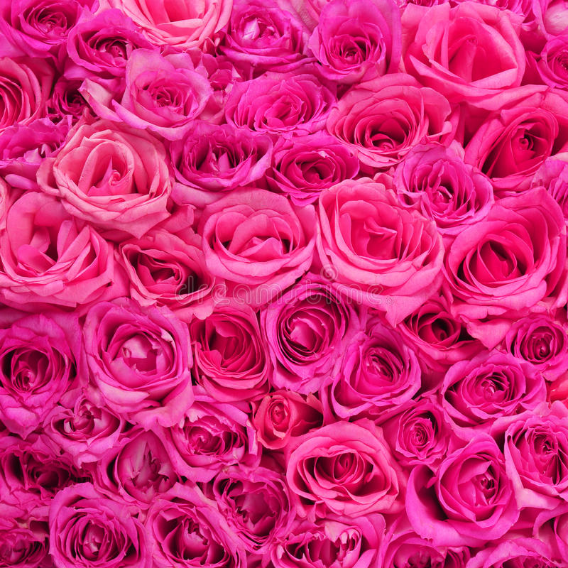 Hot pink flower background images flower decoration ideas hot pink flower background mightylinksfo Choice Image